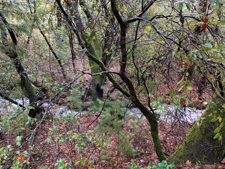 0 Forest View Ct #00, Murphys, CA, 95247