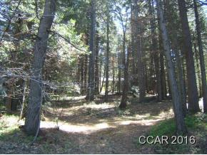 1/2 acre.  Very gentle upslope. Many huge evergreens. Owner will carry for 5 years at 6% interest, after $20,000 cash down. County sewer available. County water close.